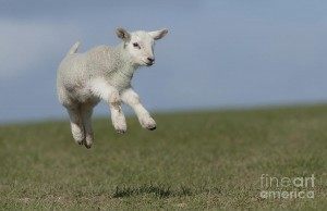 skipping-lamb-christopher-mills